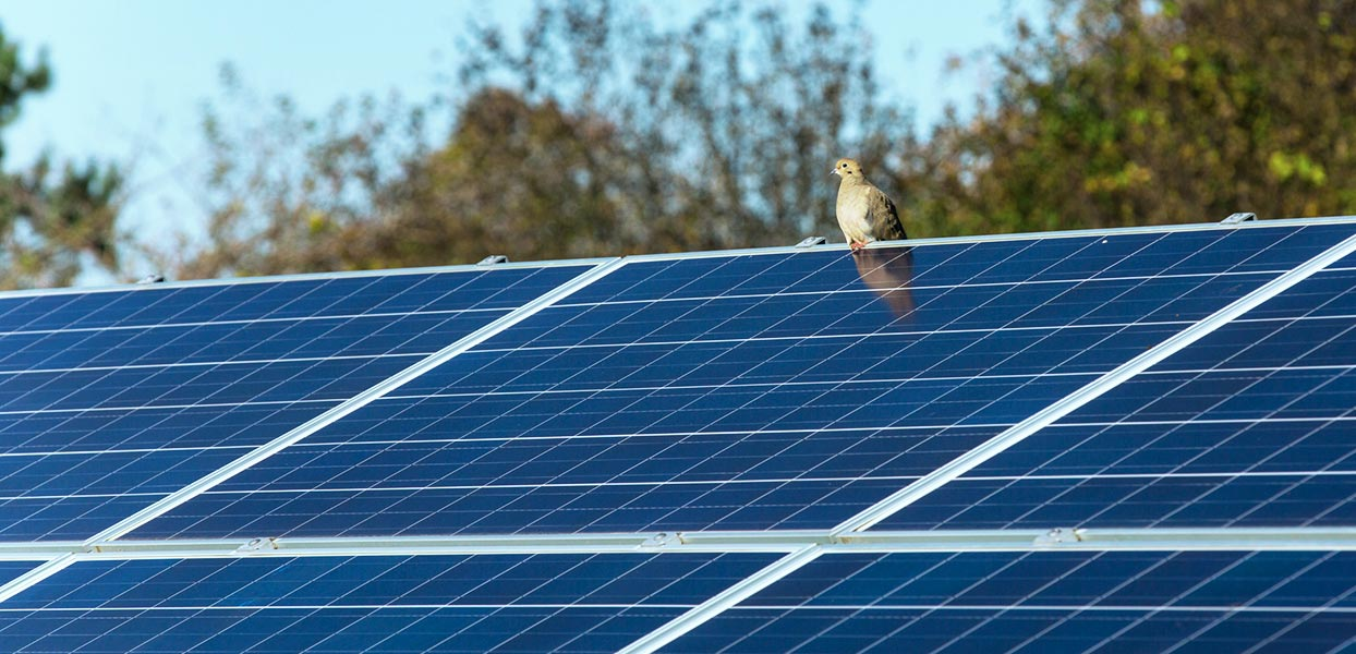 OYA Solar Launches in Maine