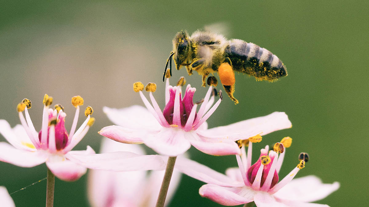 What is the Environmental Impact of Solar Energy on Biodiversity?