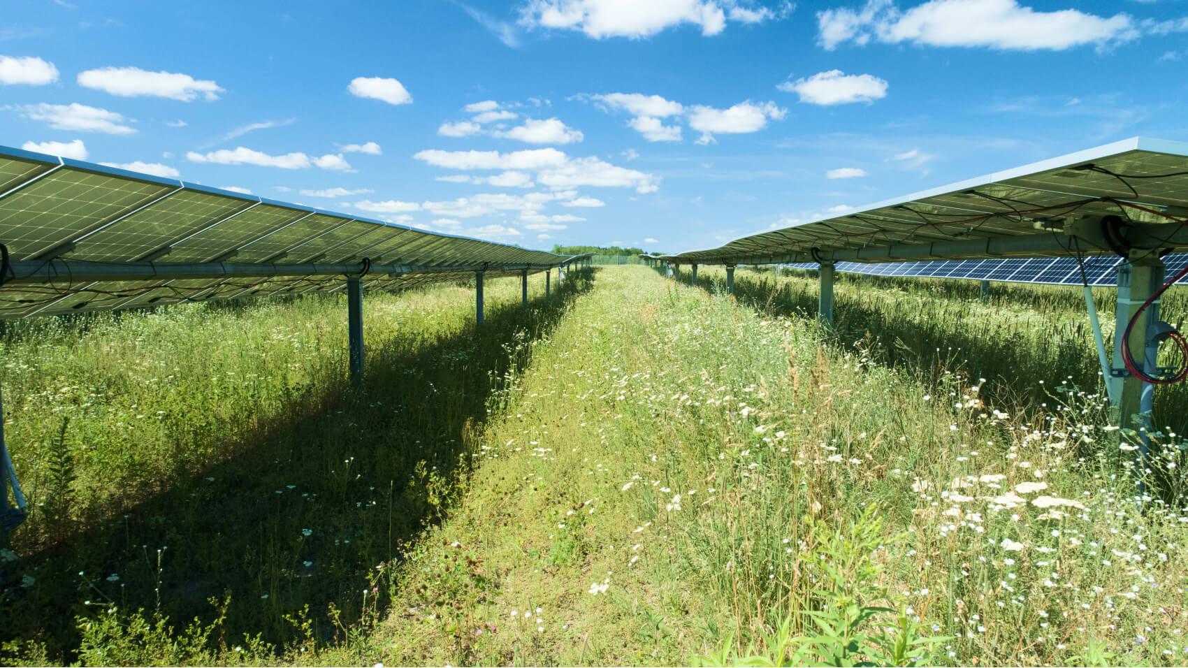 Community Solar Webinar: An Easy Way to Help Your Budget